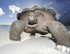 Яке саме довгоживучі тварина на землі