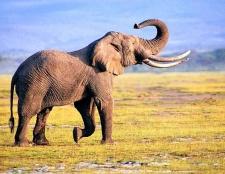 Яка тварина живе довше за всіх