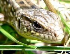 Який отрута у різних змій