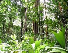 Хто мешкає в вічнозелених лісах
