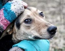 Як визначити собаку в притулок