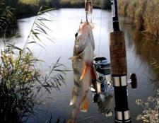 Кращі приманки для лову окуня у водоймах