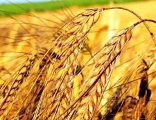 Масло зародків пшениці для красивої шкіри
