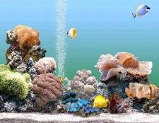 Чи заважає акваріумних рибок шум аератора