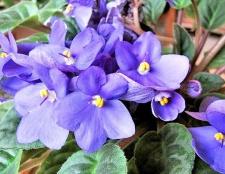 Невибагливі рослини для дому