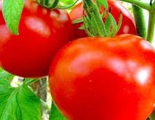 Особливості сорту томату «будьонівка»