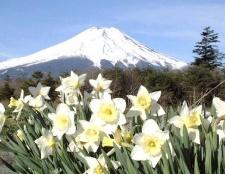 """Чому японію називають """"країною висхідного сонця"""""""