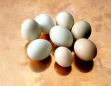 Чому курячі яйця різного кольору