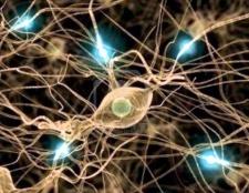 """Чому нерв називається """"блукаючим"""""""