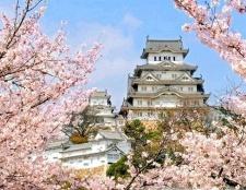 Чому сакура - символ японії