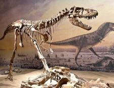Чому вимерли динозаври: деякі гіпотези