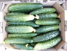 Правильне зберігання свіжих огірків