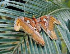 Найкрасивіші метелики світу