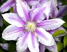 Найкрасивіші квіти у світі
