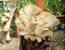 Скільки готувати гриби-гливи