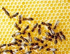 Зміст бджіл у вуликах-лежаках