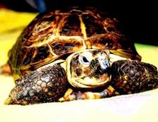 Порада 1: як доглядати за черепахою