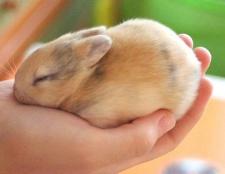 Порада 1: як доглядати за декоративним кроликом