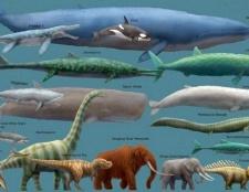 Порада 1: яка тварина найбільше у світі