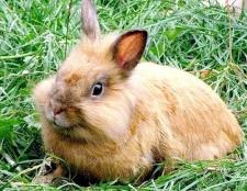 Порада 1: скільки живуть кролики