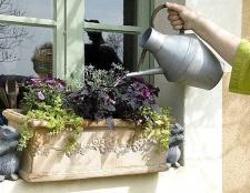 Добрива для рослин у горщиках