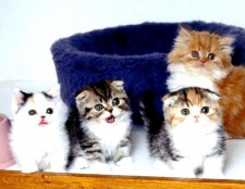Всі про кошенят: як доглядати