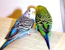 Всі про папуг: як годувати