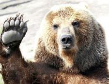 Навіщо ділити шкуру вбитого ведмедя