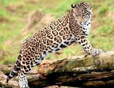 Тварини і рослини тропічних лісів